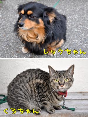 レックちゃん&くろちゃん