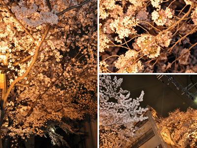夜の桜 #2