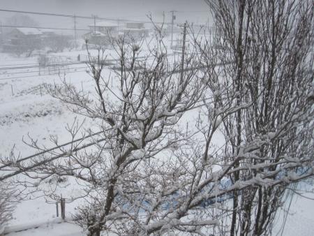tnH27-01-30雪 (8)