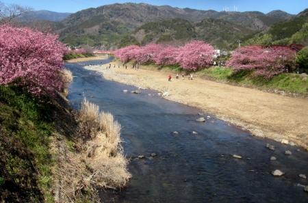 tnH27-02-27河津桜祭り (5)_1