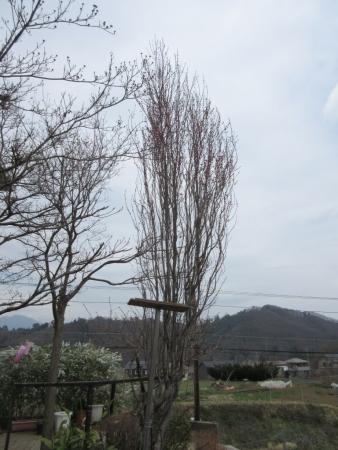 tnH27-04-01花桃 (1)