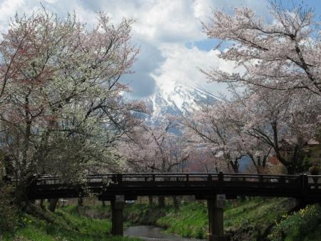 tnH27-04-23忍野_新名荘川と桜・富士山 (45)