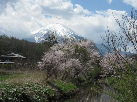 tnH27-04-23忍野_新名荘川と桜・富士山 (37)