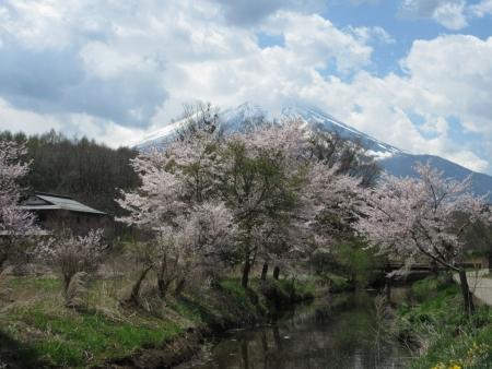 tnH27-04-23忍野_新名荘川と桜・富士山 (23)