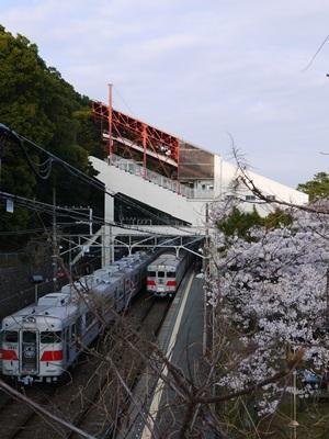 須磨浦公園の桜3