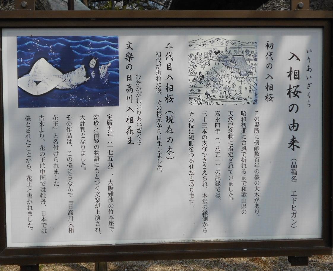 入相桜(標識)