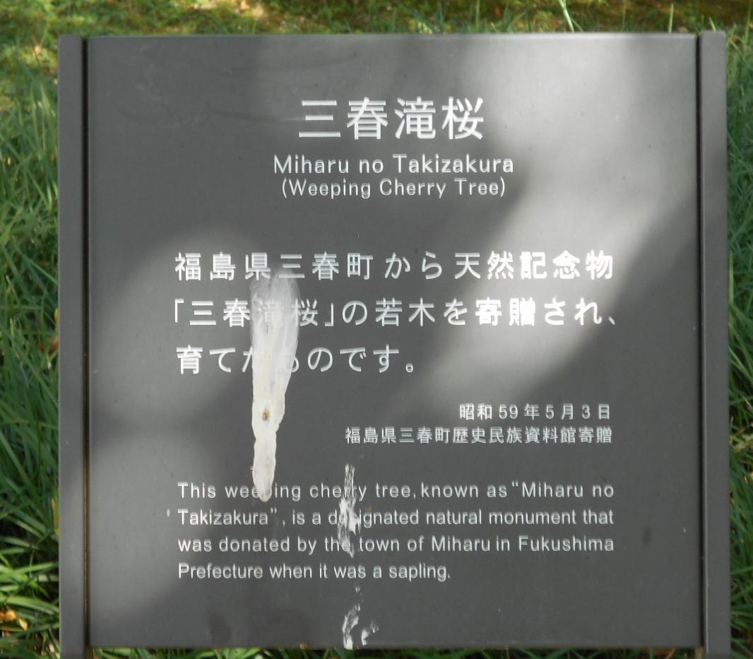 三春滝桜の説明