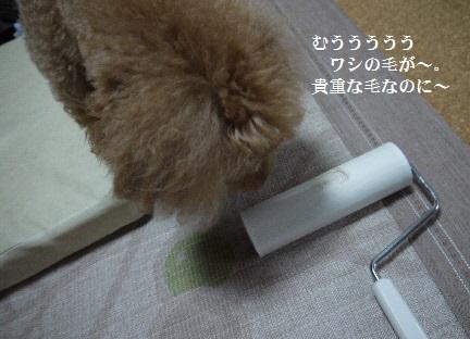 P1360876(1).jpg