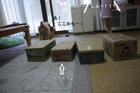P1360944(1).jpg