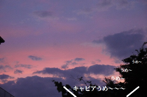 P1390019(1).jpg