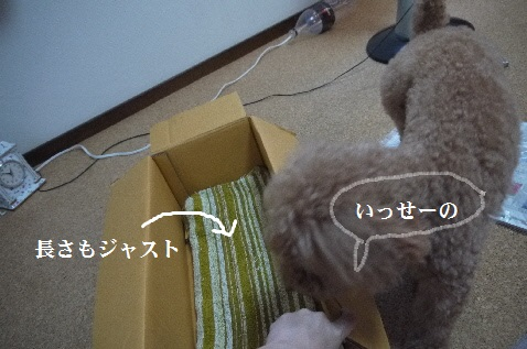 P1390223(1).jpg