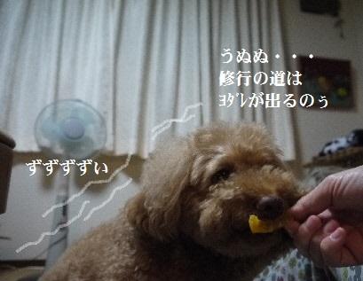 P1390383(1).jpg