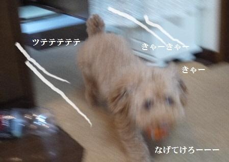P1390479(1).jpg