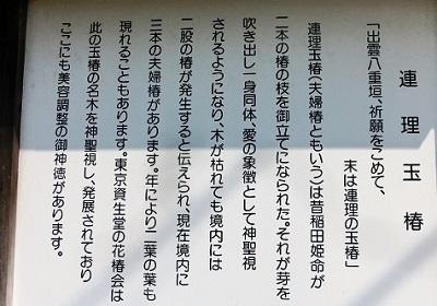 CIMG4423 - コピー - コピー - コピー