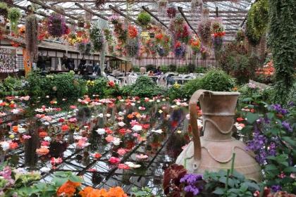 花鳥園 池