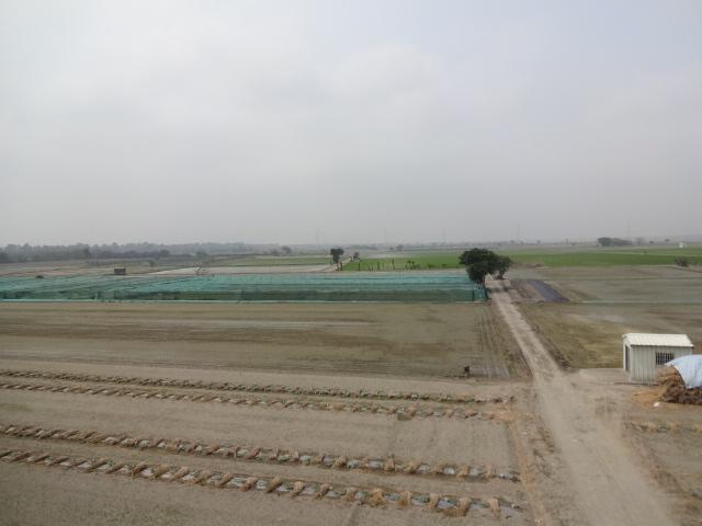 河川敷は広大な畑