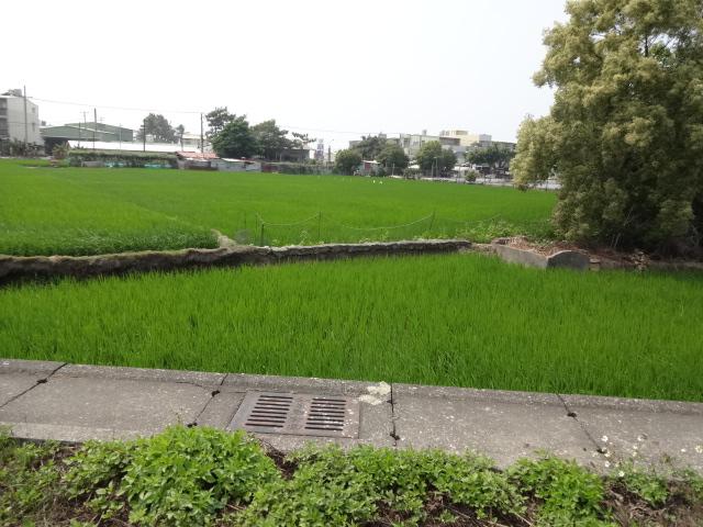 台南の田んぼ