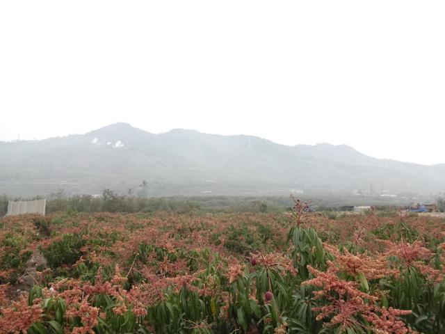 枋山火車站遠景