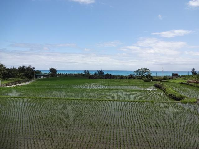 田んぼと太平洋1