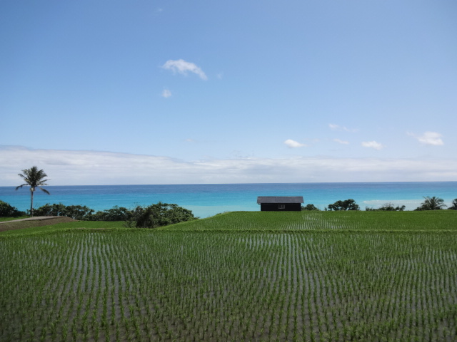 田んぼと太平洋2