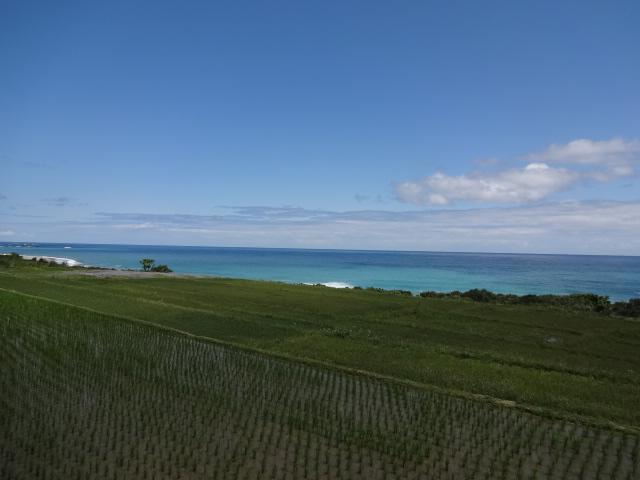 田んぼと太平洋3