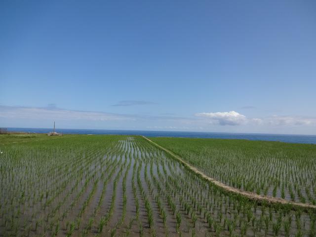 田んぼと太平洋4