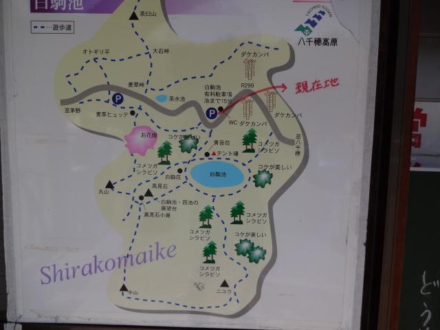 白駒池周辺地図