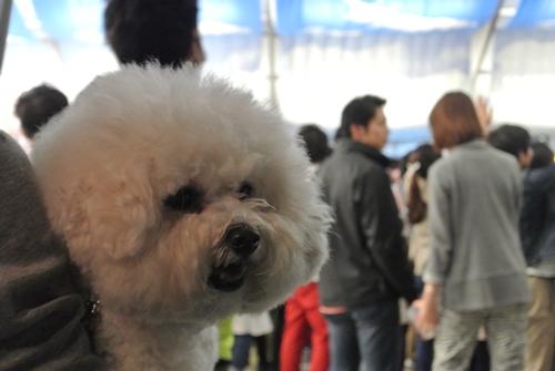 Yokohama Fruhlings Fest (5)