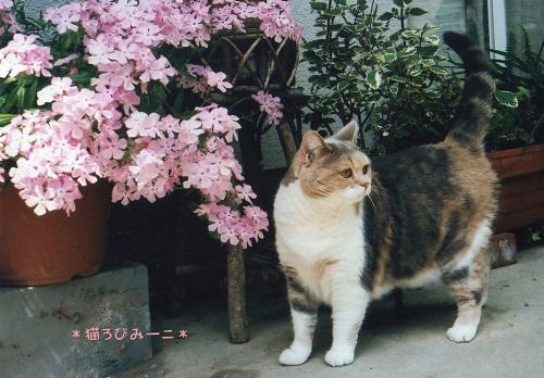 みーことお花