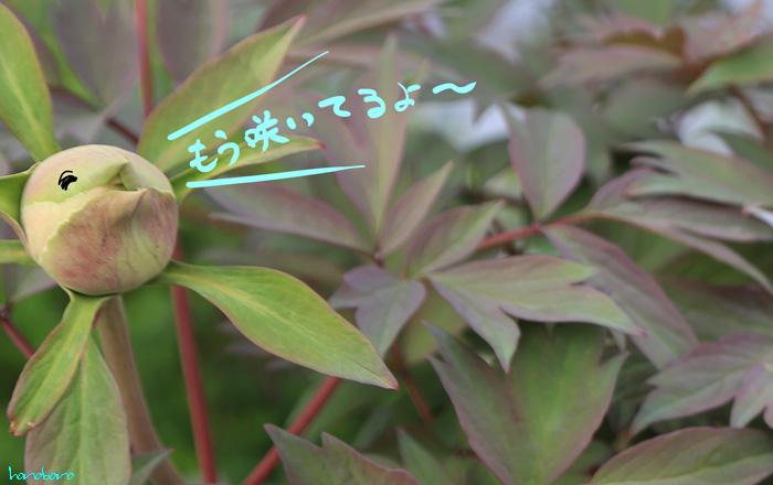 001-ti-6.jpg