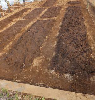 第二菜園 区画整理