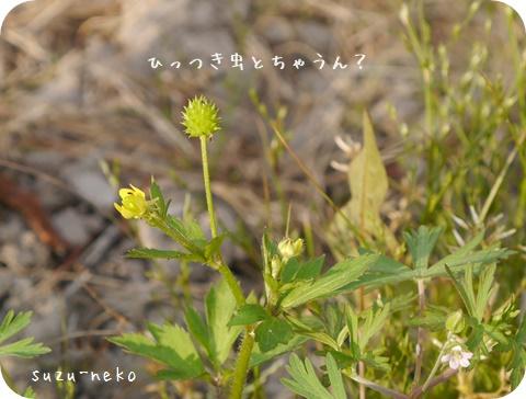 20150509-001.jpg