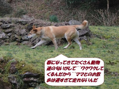 P3110841_convert_20150313074651.jpg