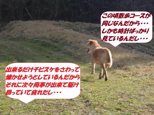 P3110847_convert_20150313074807.jpg