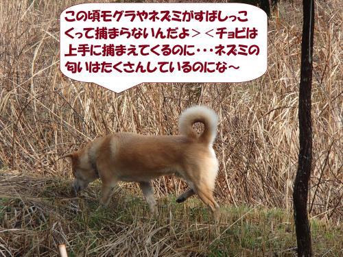 P3140008_convert_20150326110008.jpg