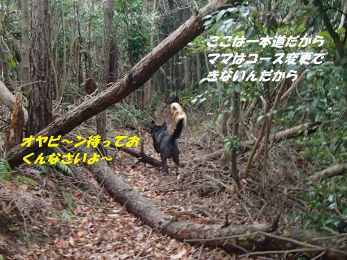 P3200152_convert_20150321130501.jpg