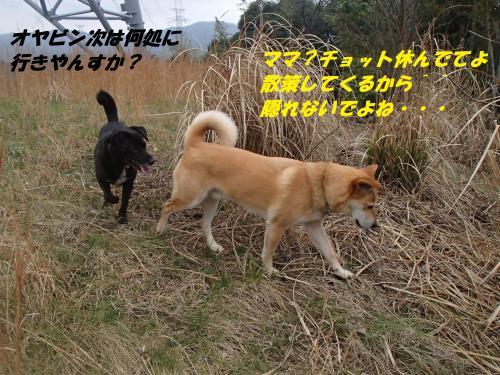 P3200158_convert_20150321130533.jpg