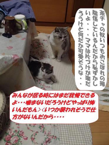 P3220289_convert_20150324095123.jpg
