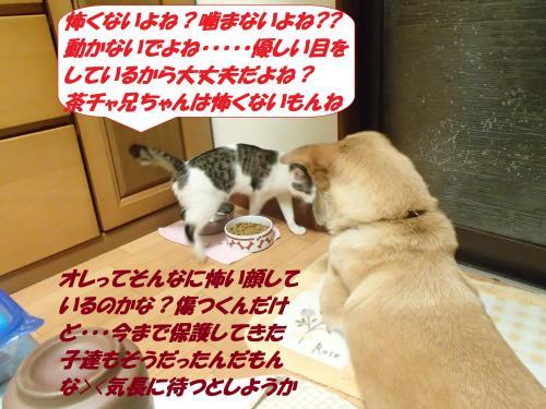 P3240312_convert_20150324095247.jpg
