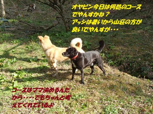 P3250319_convert_20150331095302.jpg