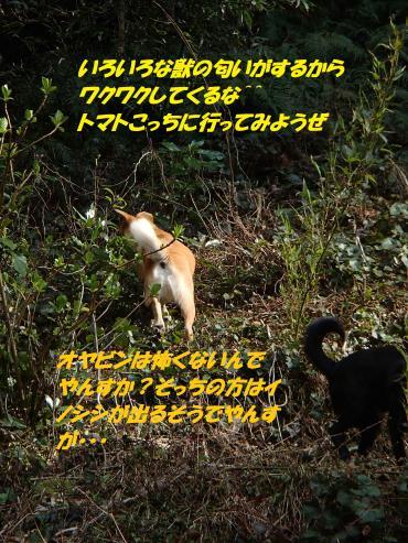 P3250322_convert_20150331095224.jpg