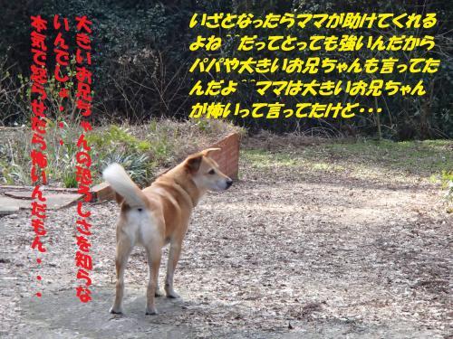 P3250324_convert_20150331095321.jpg