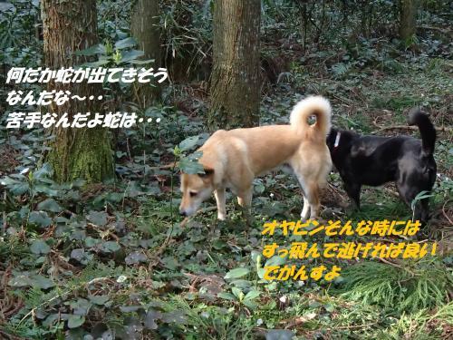 P3250340_convert_20150331095405.jpg