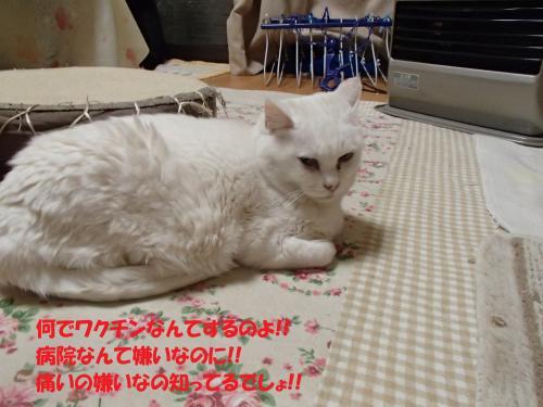 P3250359_convert_20150328125954.jpg