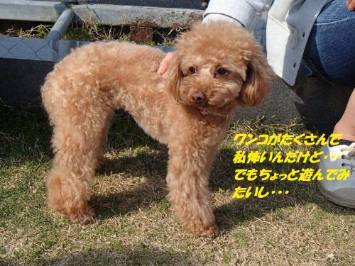 P3290399_convert_20150330150521.jpg