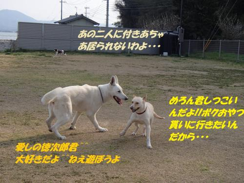 P3290409_convert_20150330150638.jpg