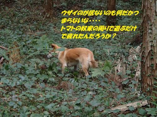 P3310424+(2)_convert_20150401101653.jpg