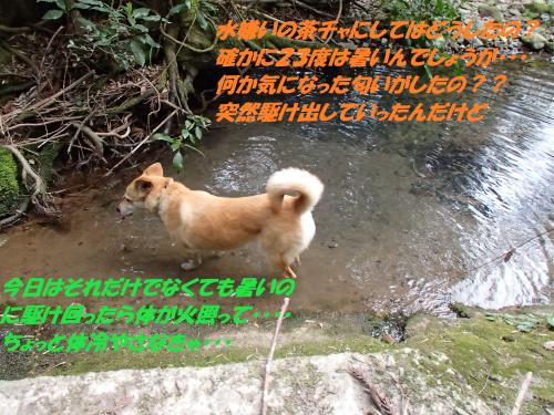P3310434_convert_20150401101720.jpg
