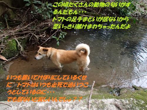 P3310435_convert_20150401101735.jpg
