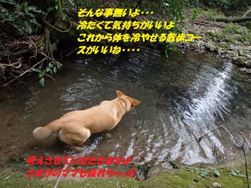 P3310436_convert_20150401101753.jpg